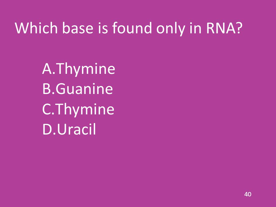 40 Which base is found only in RNA? A.Thymine B.Guanine C.Thymine D.Uracil
