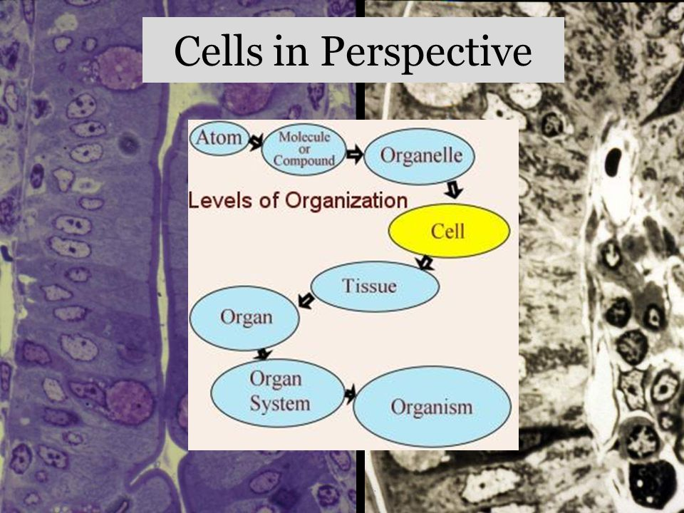 Cells in Perspective