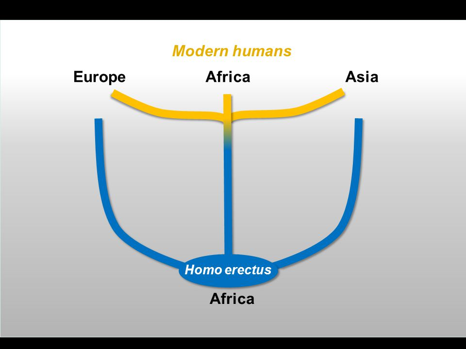 Africa EuropeAsia Homo erectus Modern humans