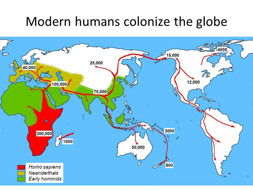 Modern humans colonize the globe Homo sapiens Neanderthals Early hominids 3000 800 50,000 1500 200,000 100,000 40,000 70,000 25,000 15,000 12,000 4500