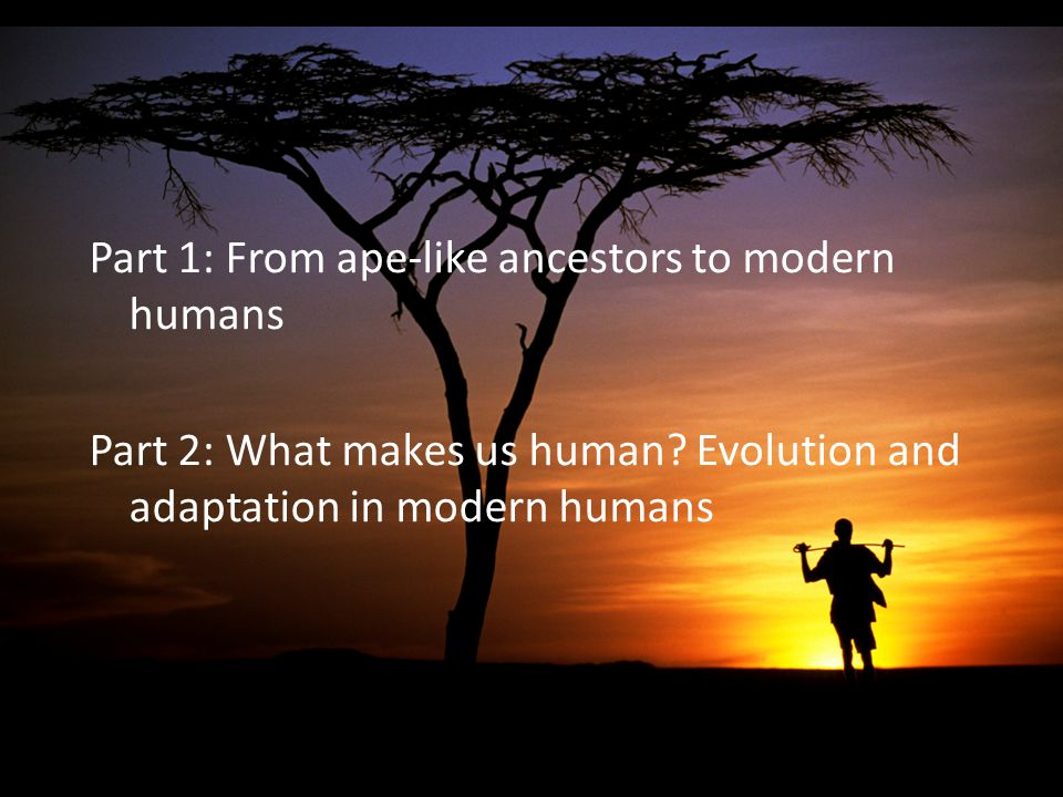 Part 1: From ape-like ancestors to modern humans Part 2: What makes us human? Evolution and adaptation in modern humans