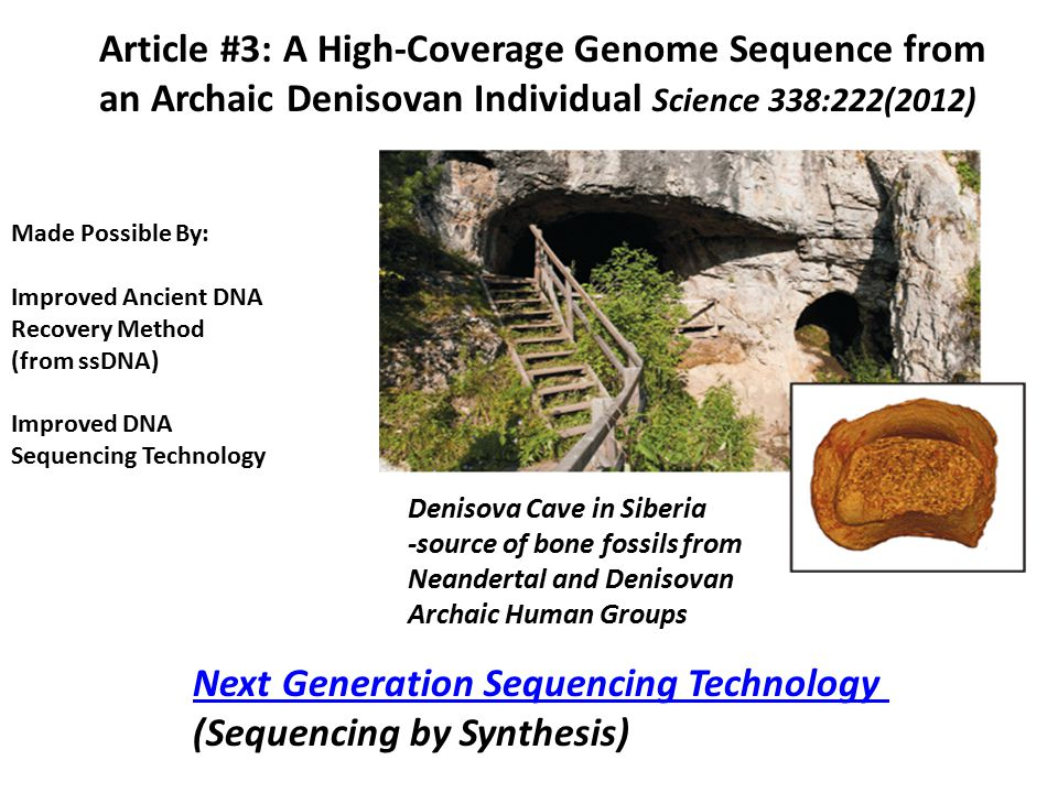 Article #3: A High-Coverage Genome Sequence from an Archaic Denisovan Individual Science 338:222(2012) Denisova Cave in Siberia -source of bone fossil
