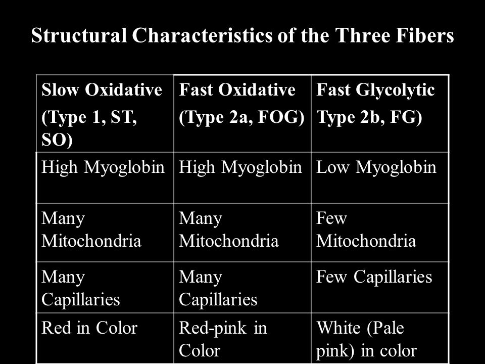 Structural Characteristics of the Three Fibers Slow Oxidative (Type 1, ST, SO) Fast Oxidative (Type 2a, FOG) Fast Glycolytic Type 2b, FG) High Myoglob
