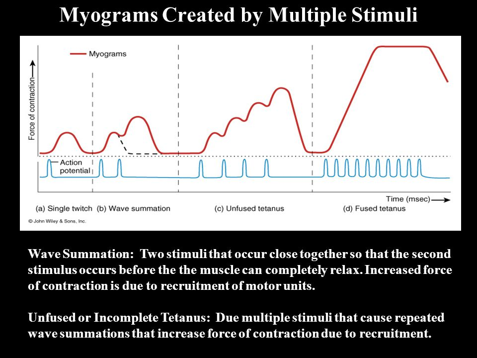 Myograms Created by Multiple Stimuli Wave Summation: Two stimuli that occur close together so that the second stimulus occurs before the the muscle ca