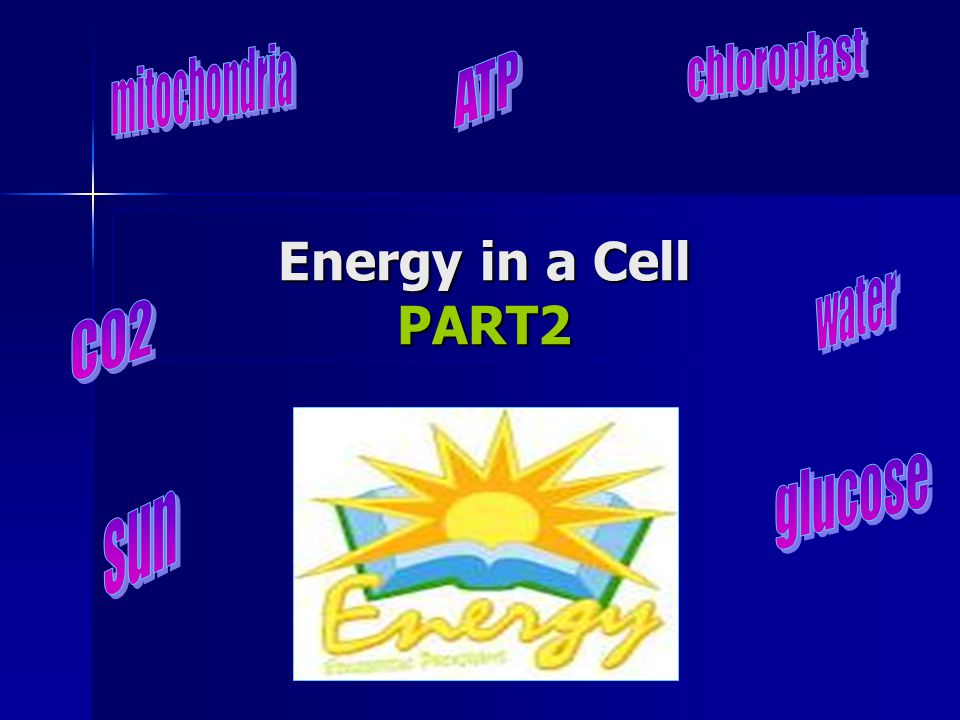 Energy in a Cell PART2