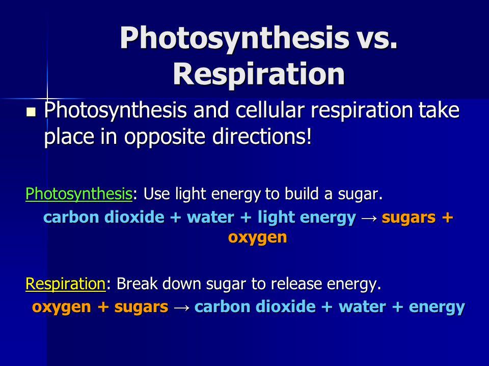 Photosynthesis vs.