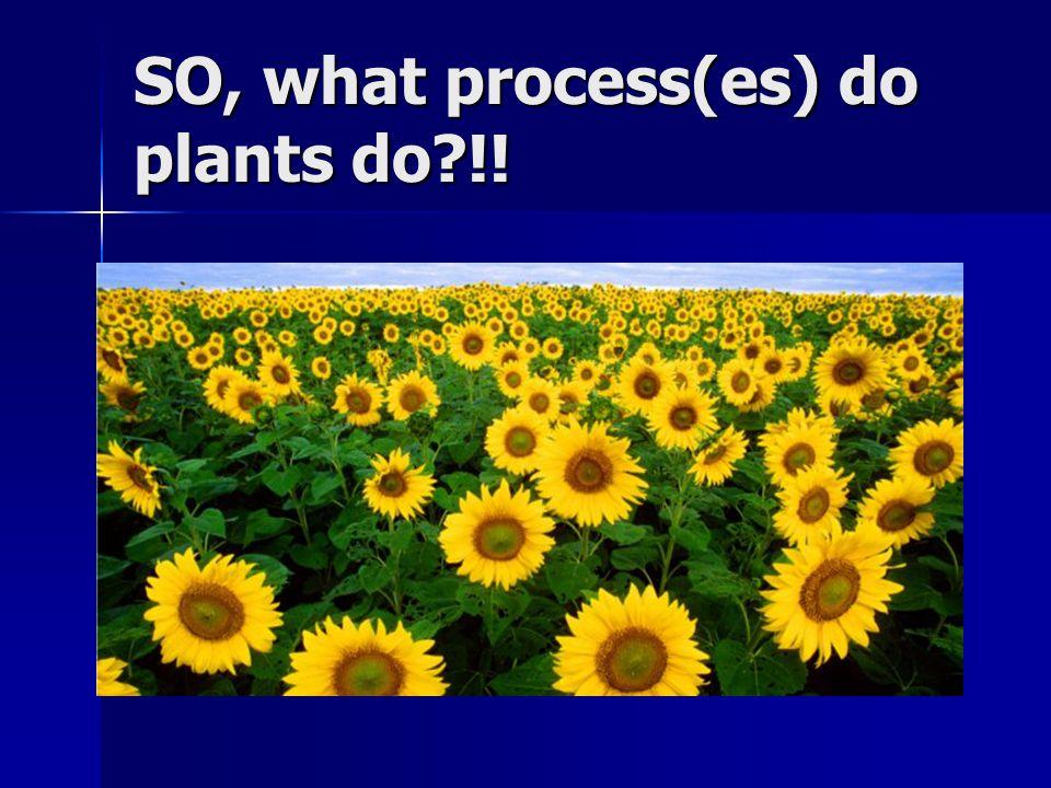 SO, what process(es) do plants do !!