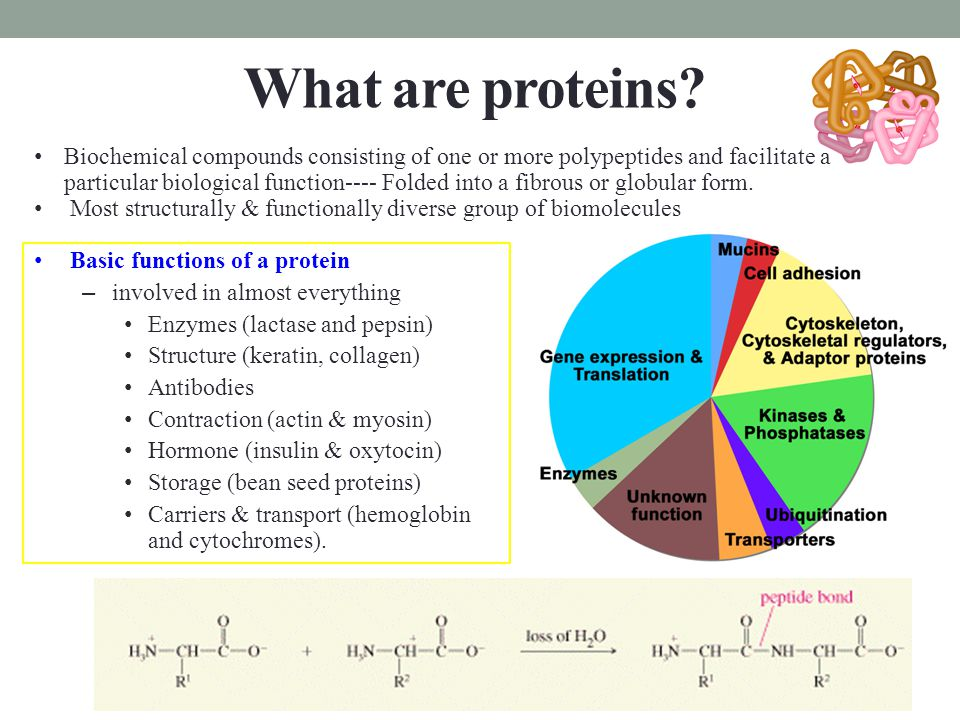 Amino acids  Amino acids play central roles as both building blocks of proteins and as intermediates of metabolism.