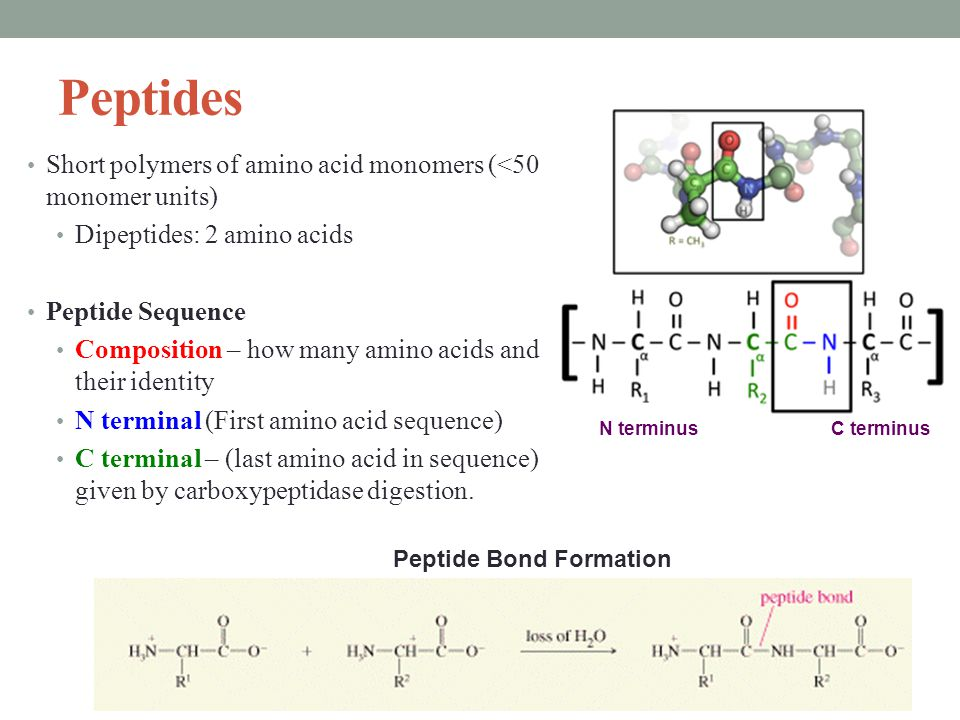 Peptides Short polymers of amino acid monomers (<50 monomer units) Dipeptides: 2 amino acids Peptide Sequence Composition – how many amino acids and their identity N terminal (First amino acid sequence) C terminal – (last amino acid in sequence) given by carboxypeptidase digestion.