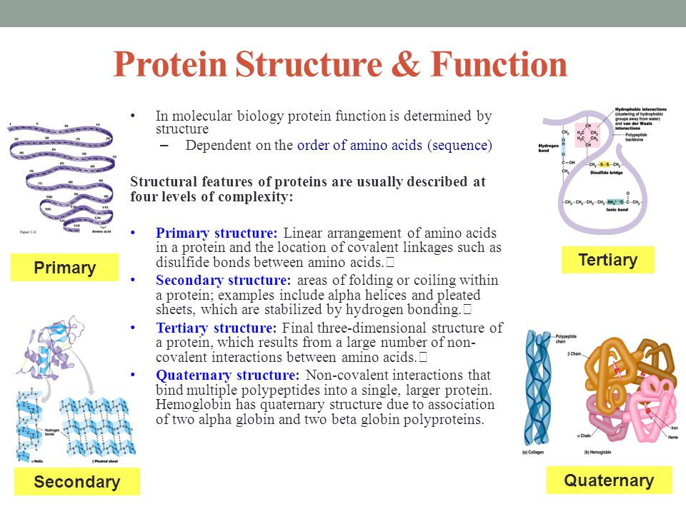Molecular and Cellular Proteomics Global study of the expression of genetic information at the protein level (proteome).