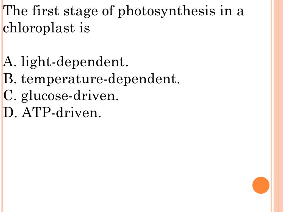 The first stage of photosynthesis in a chloroplast is A.