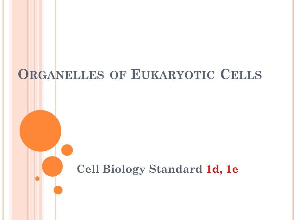 O RGANELLES OF E UKARYOTIC C ELLS Cell Biology Standard 1d, 1e