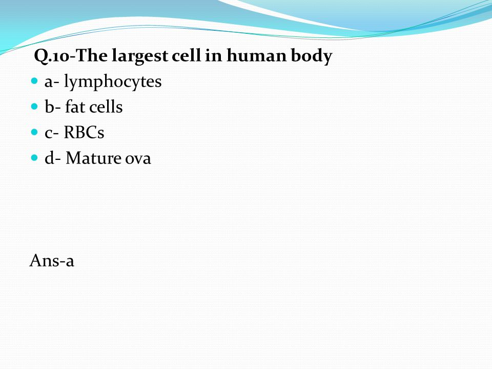 Q.10-The largest cell in human body a- lymphocytes b- fat cells c- RBCs d- Mature ova Ans-a