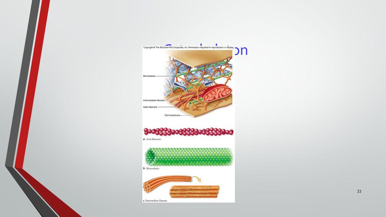 33 Cytoskeleton