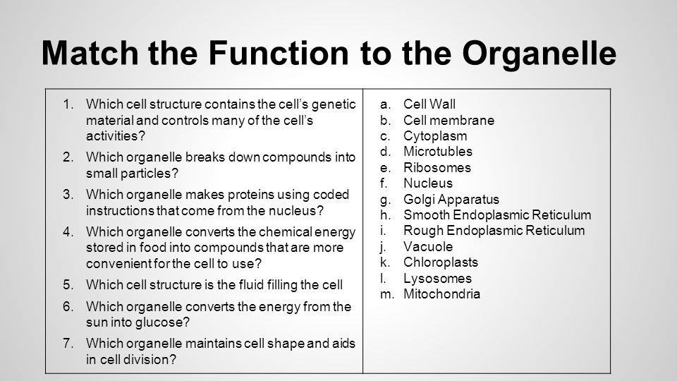 Match the Function to the Organelle 1.Which cell structure contains the cell's genetic material and controls many of the cell's activities.