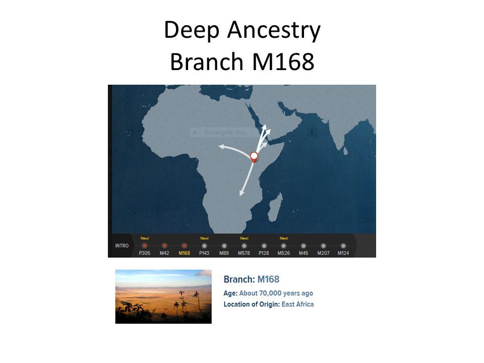 Deep Ancestry Branch M168