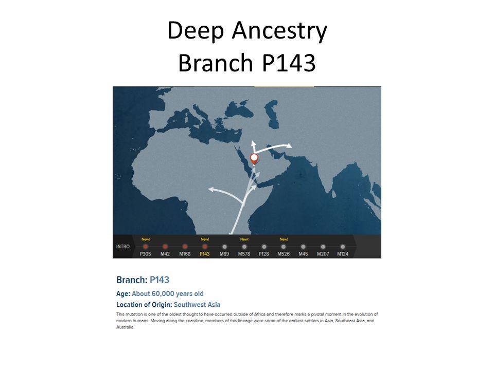Deep Ancestry Branch P143