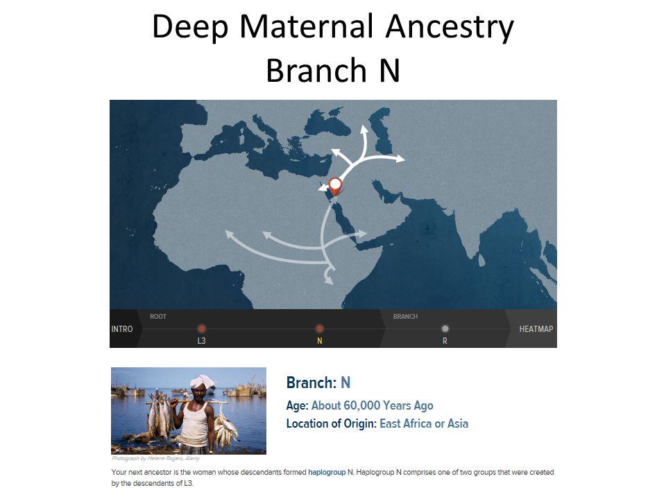Deep Maternal Ancestry Branch N