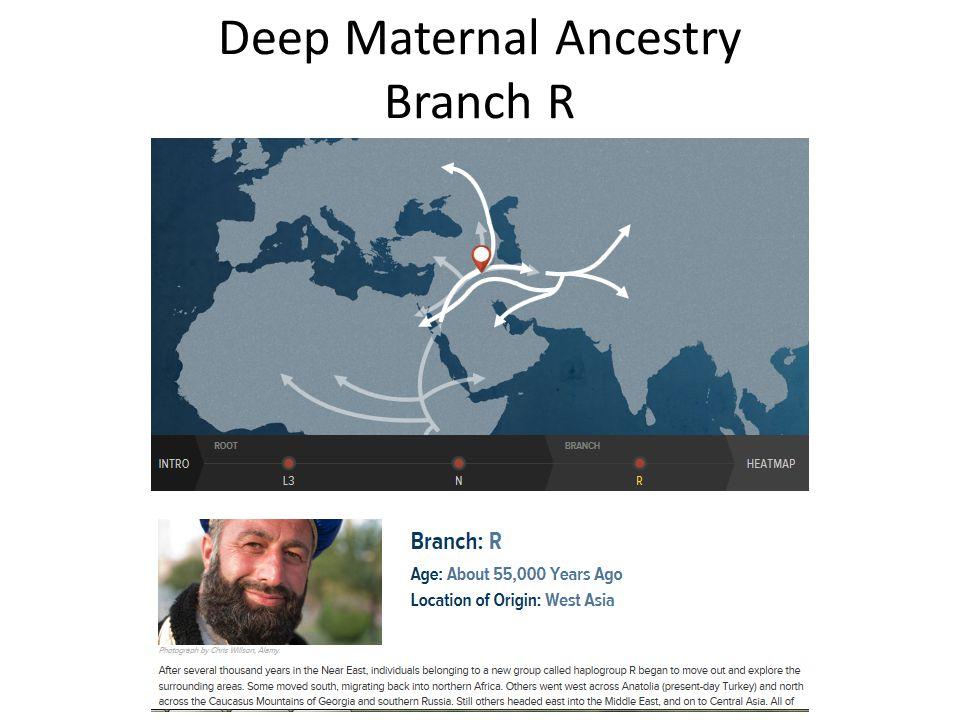 Deep Maternal Ancestry Branch R
