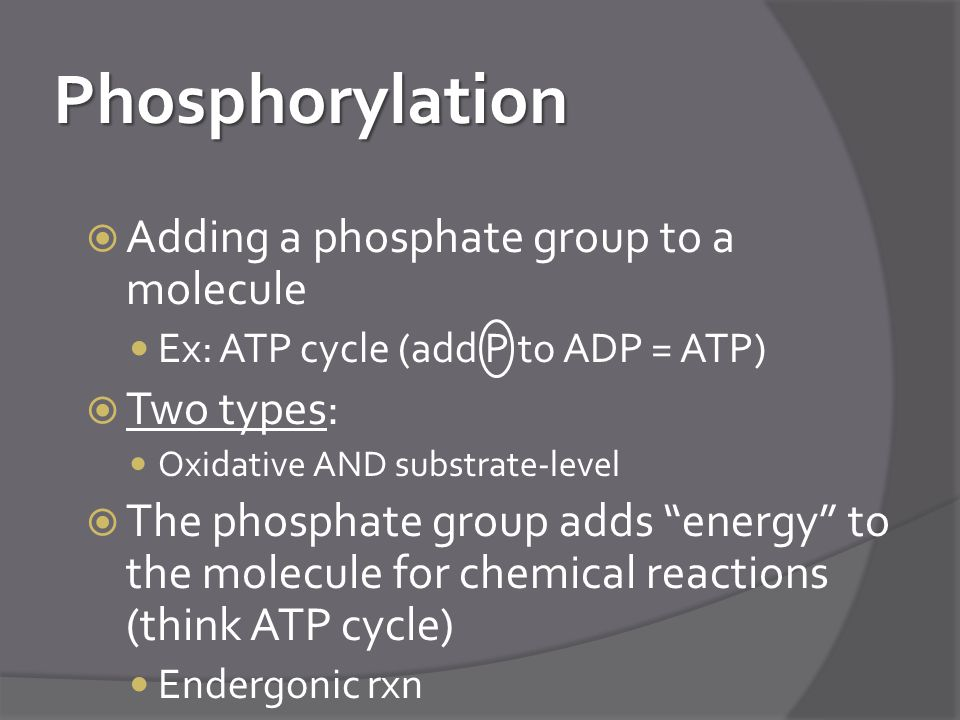 Phosphorylation  Adding a phosphate group to a molecule Ex: ATP cycle (add P to ADP = ATP)  Two types: Oxidative AND substrate-level  The phosphate group adds energy to the molecule for chemical reactions (think ATP cycle) Endergonic rxn