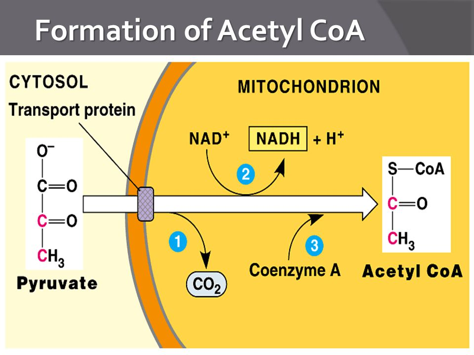 Formation of Acetyl CoA