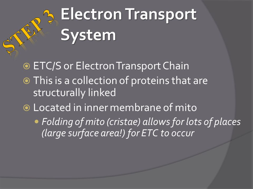 Electron Transport System  ETC/S or Electron Transport Chain  This is a collection of proteins that are structurally linked  Located in inner membrane of mito Folding of mito (cristae) allows for lots of places (large surface area!) for ETC to occur