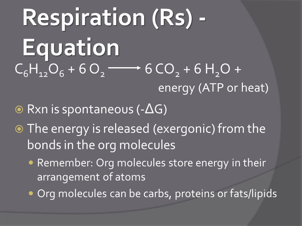 Respiration (Rs) - Equation C 6 H 12 O 6 + 6 O 2 6 CO 2 + 6 H 2 O + energy (ATP or heat)  Rxn is spontaneous (- ∆ G)  The energy is released (exergonic) from the bonds in the org molecules Remember: Org molecules store energy in their arrangement of atoms Org molecules can be carbs, proteins or fats/lipids