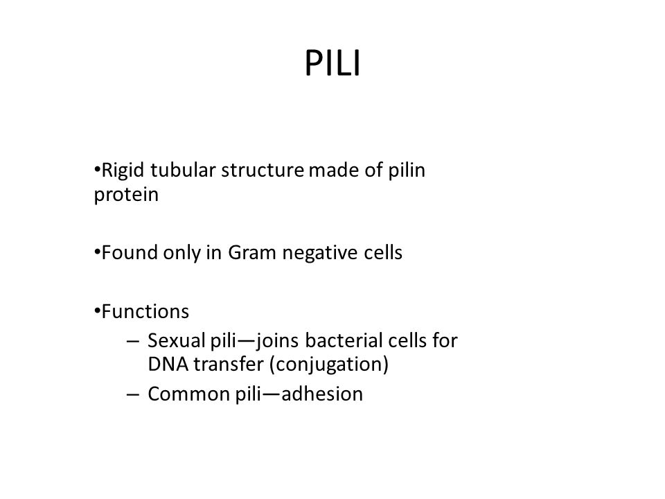 PILI Rigid tubular structure made of pilin protein Found only in Gram negative cells Functions – Sexual pili—joins bacterial cells for DNA transfer (conjugation) – Common pili—adhesion