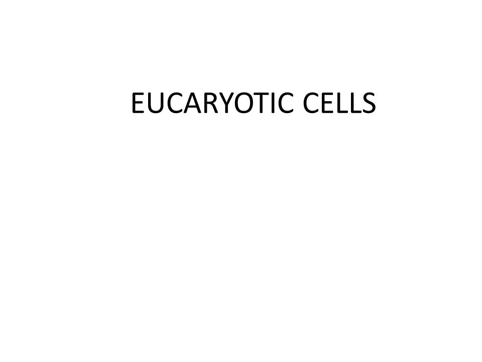 EUCARYOTIC CELLS