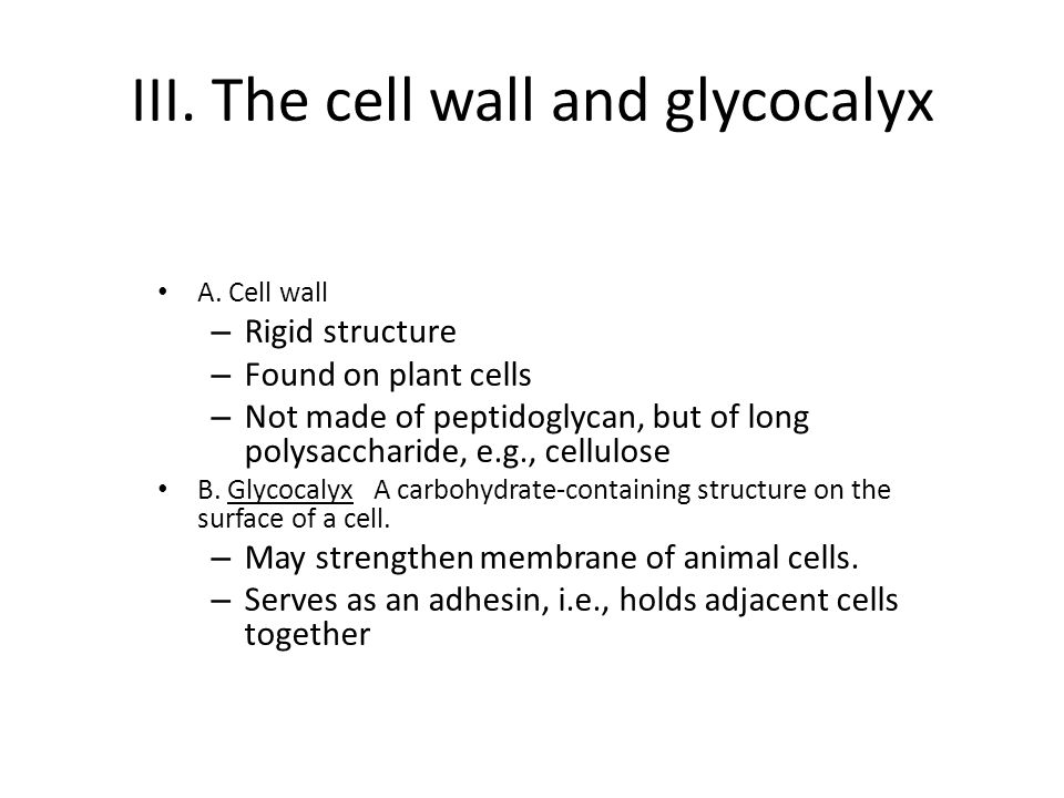III. The cell wall and glycocalyx A.