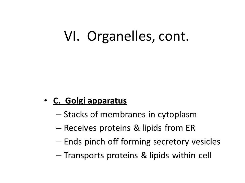 VI.Organelles, cont. C.