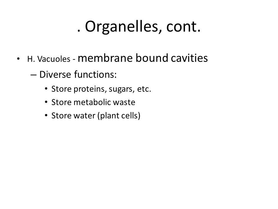 Organelles, cont.H.