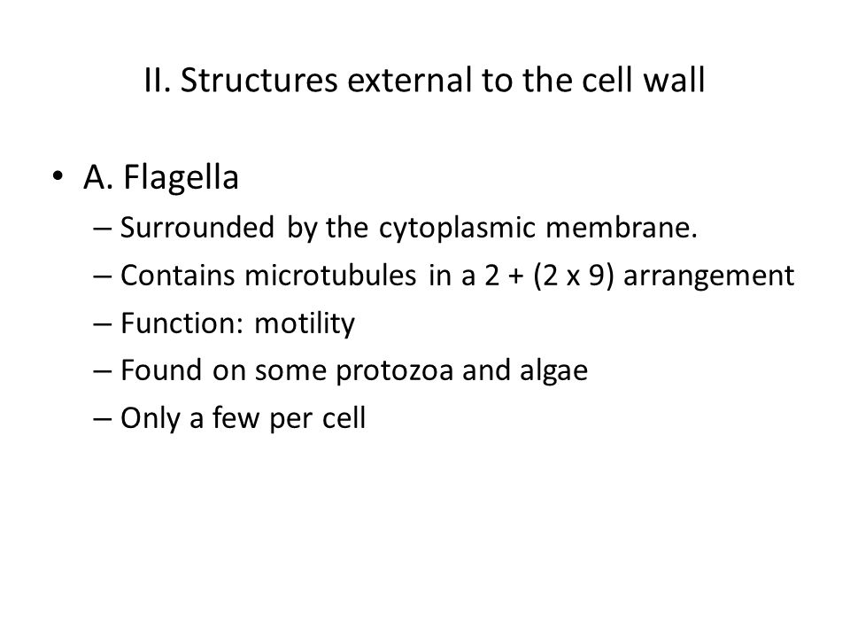 II. Structures external to the cell wall A. Flagella – Surrounded by the cytoplasmic membrane.