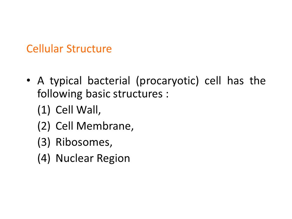 Cellular Structure A typical bacterial (procaryotic) cell has the following basic structures : (1)Cell Wall, (2)Cell Membrane, (3)Ribosomes, (4)Nuclear Region