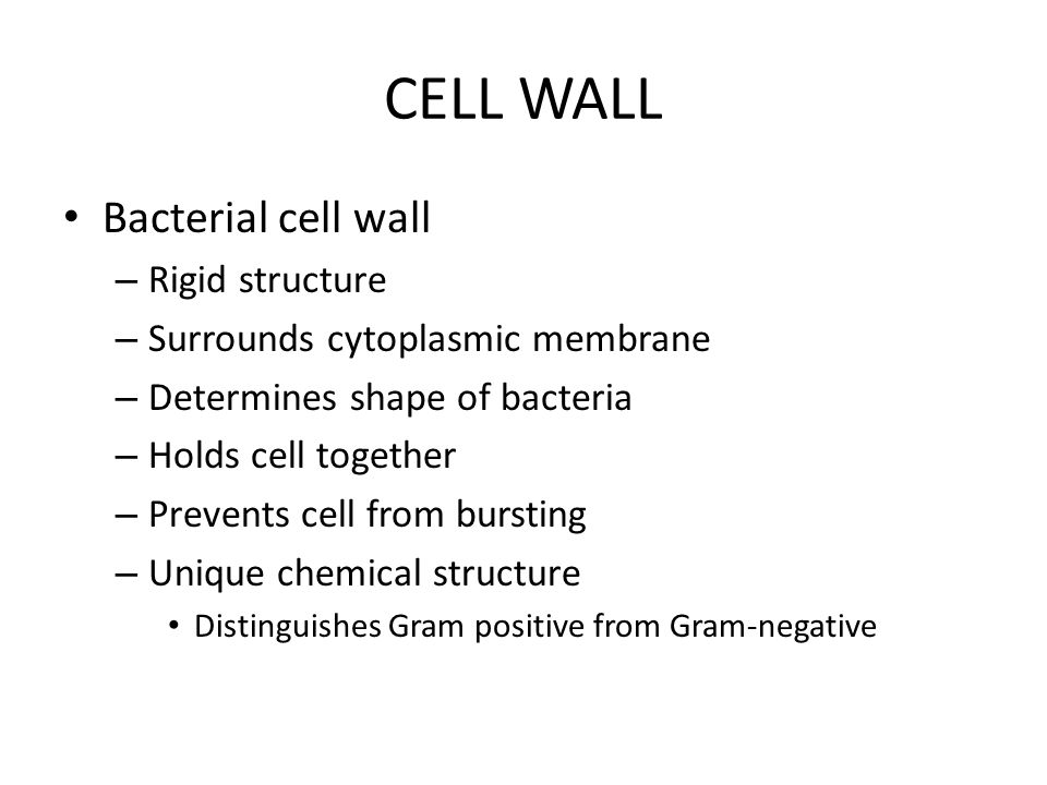 CELL WALL Bacterial cell wall – Rigid structure – Surrounds cytoplasmic membrane – Determines shape of bacteria – Holds cell together – Prevents cell from bursting – Unique chemical structure Distinguishes Gram positive from Gram-negative