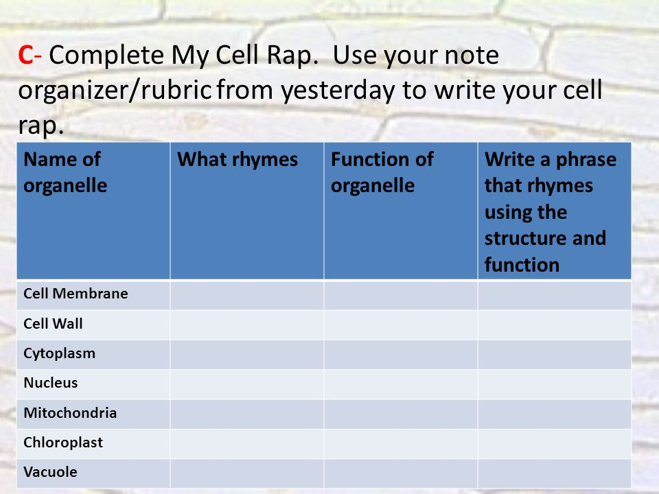 C- Complete My Cell Rap. Use your note organizer/rubric from yesterday to write your cell rap.