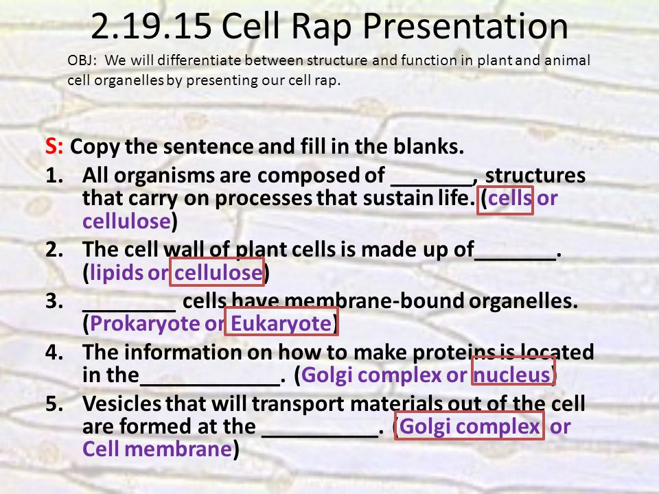 2.19.15 Cell Rap Presentation S: Copy the sentence and fill in the blanks.