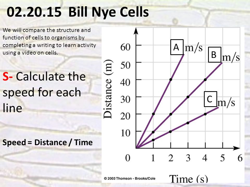 02.20.15 Bill Nye Cells We will compare the structure and function of cells to organisms by completing a writing to learn activity using a video on cells.