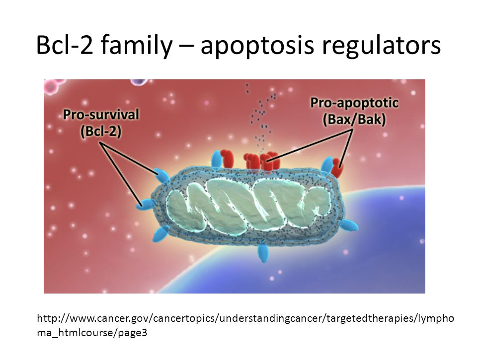 Bcl-2 family – apoptosis regulators http://www.cancer.gov/cancertopics/understandingcancer/targetedtherapies/lympho ma_htmlcourse/page3
