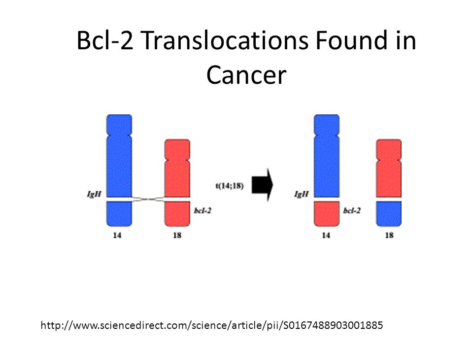 http://www.sciencedirect.com/science/article/pii/S0167488903001885 Bcl-2 Translocations Found in Cancer