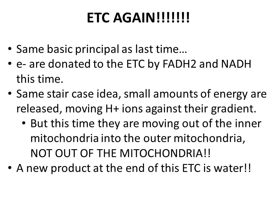 ETC AGAIN!!!!!!! Same basic principal as last time… e- are donated to the ETC by FADH2 and NADH this time. Same stair case idea, small amounts of ener