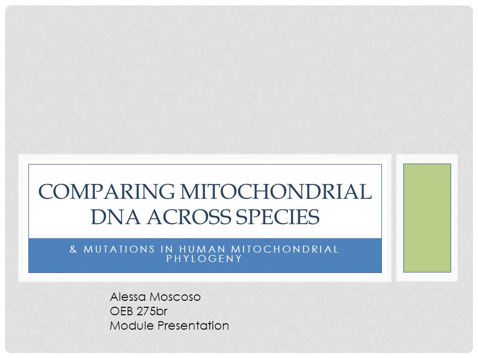 NUCLEOTIDE ONLINE DATABASES A prime tool for analyzing molecular data Accessible from anywhere Incorporate archeological specimens (Neanderthal data)