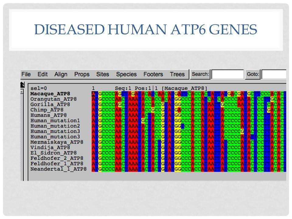 DISEASED HUMAN ATP6 GENES