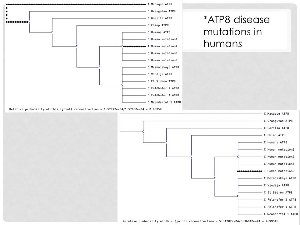 *ATP8 disease mutations in humans