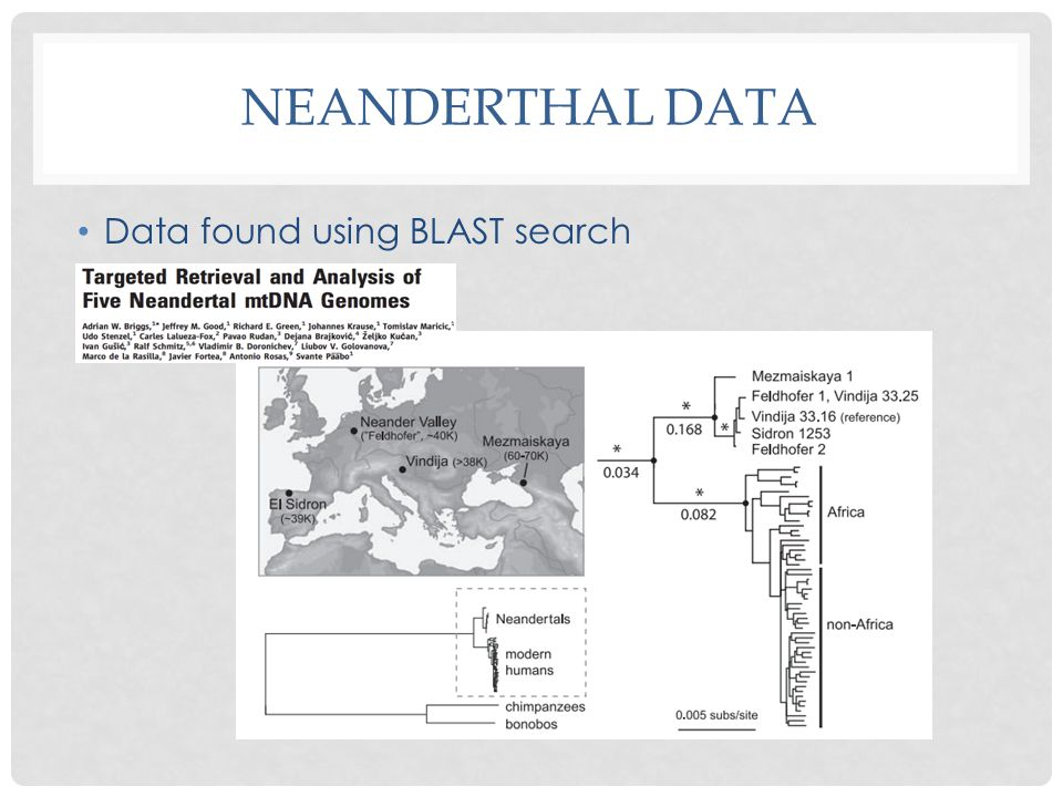 NEANDERTHAL DATA Data found using BLAST search