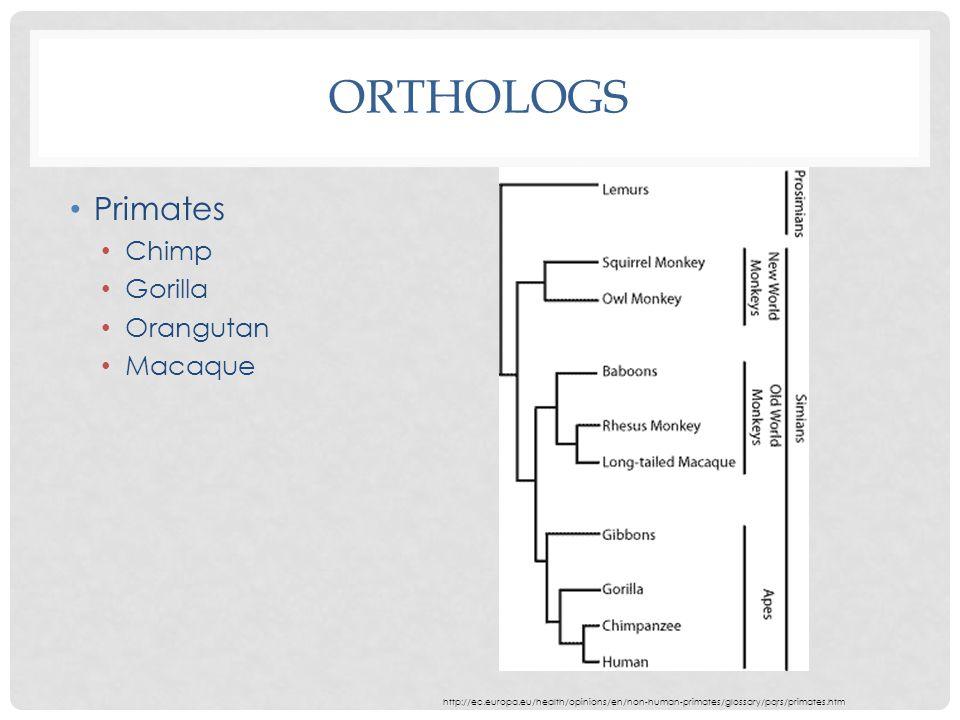 ORTHOLOGS Primates Chimp Gorilla Orangutan Macaque http://ec.europa.eu/health/opinions/en/non-human-primates/glossary/pqrs/primates.htm