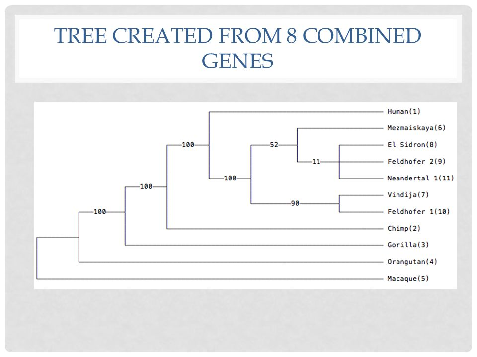 TREE CREATED FROM 8 COMBINED GENES