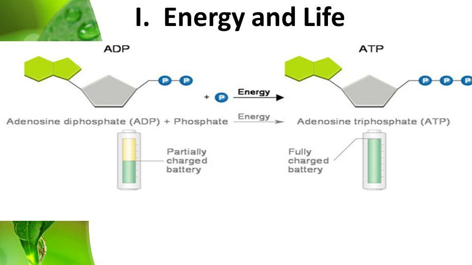 I. Energy and Life