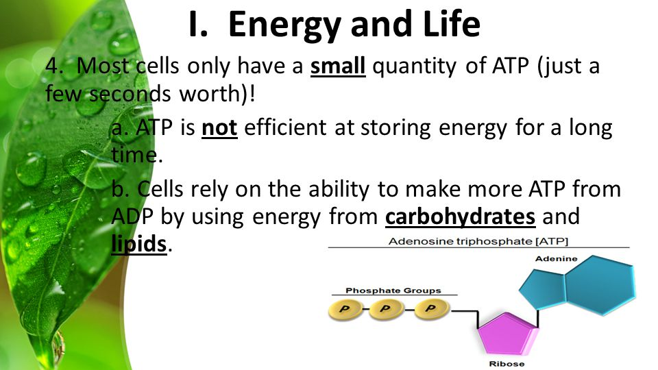 4. Most cells only have a small quantity of ATP (just a few seconds worth).