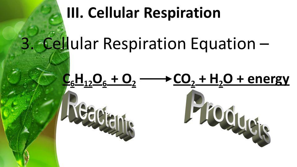 3. Cellular Respiration Equation – C 6 H 12 O 6 + O 2 CO 2 + H 2 O + energy III.